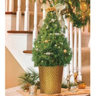 Fancy Filligree Decorated Spruce Tree
