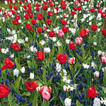 Red, White and Blue Sprinkle Garden