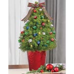 Colourful Presents Decorated Spruce Tree