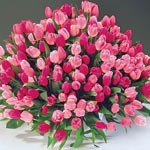 Apple Blossom Tulip Mixture