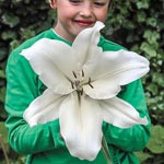 Big Brother Oriental Lily
