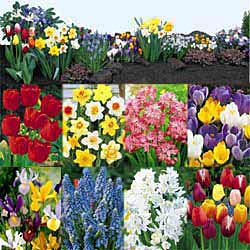 Breck's Bulbs CA http://www.brecksbulbs.ca/product/Breck-Dutch-Treat-Collection/